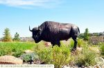 Buffalo_at_the_Entrance_to_the_Esperanza_Neighborhood__Castle_Pines_North__CO.jpg