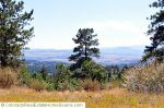 Views_-_Daniel_s_Park__Castle_Pines_North__CO.jpg